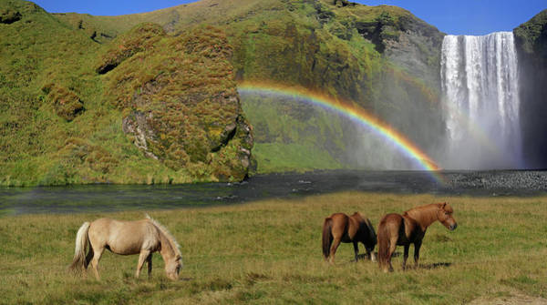 Wall Art - Photograph - Icelandic Horses by Images Etc Ltd