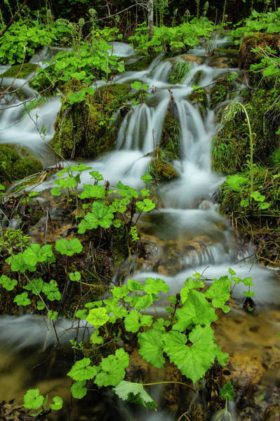 Wall Art - Photograph - Waterfall by Christian Heeb