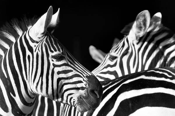 Photograph - 10019 Zebras by Kim Lessel