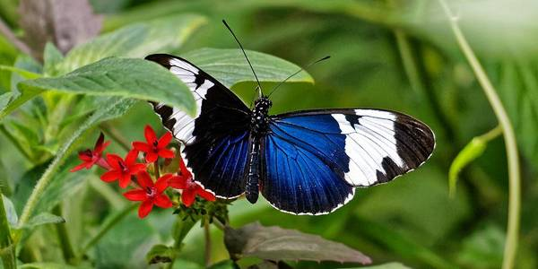 Photograph - 10th Muse - Sapho Longwing by KJ Swan