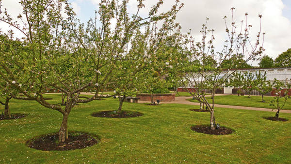 Photograph - 11/05/19 Chorley. Astley Hall. Walled Garden. The Orchard. by Lachlan Main