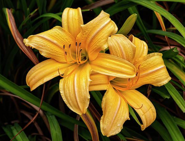 Photograph - Lilies by Robert Ullmann