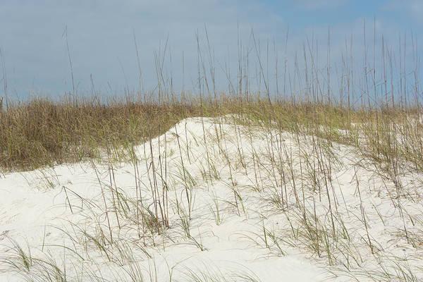 Photograph - 11067 Dunes by Pamela Williams