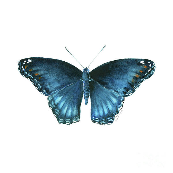 Painting - 113 Brenton Blue Butterfly by Amy Kirkpatrick