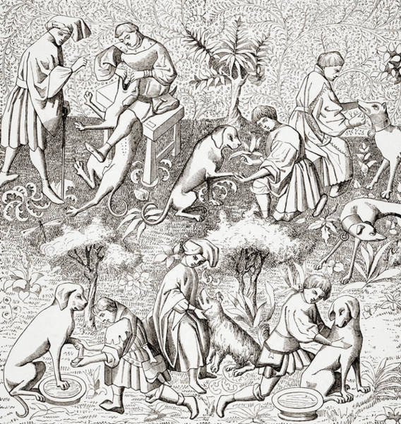 Diseases Of Dogs And Their Cures.  Art Print