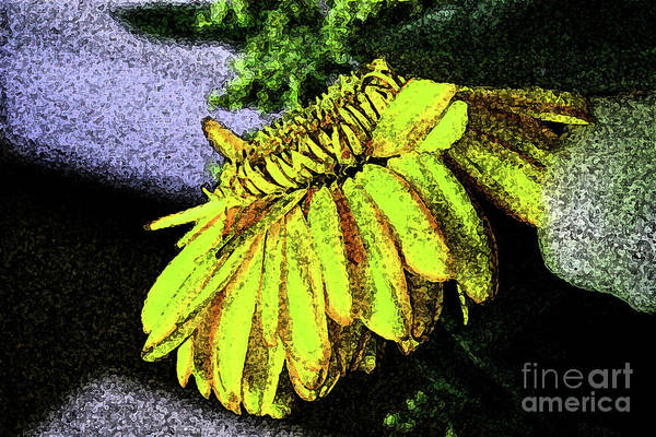 12-4-2008abcdefghijklmnop Art Print