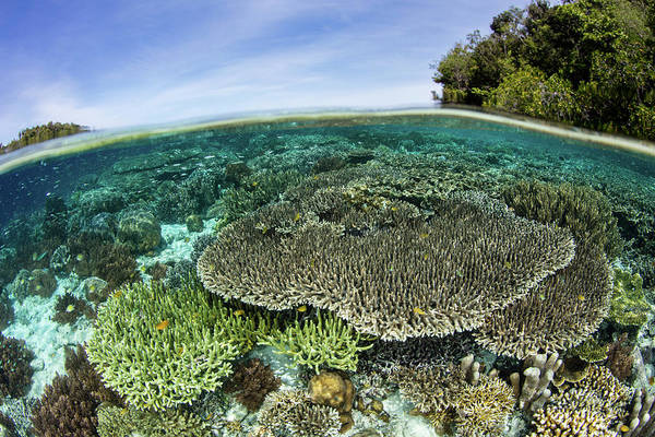 Wall Art - Photograph - A Beautiful Coral Reef Grows by Ethan Daniels