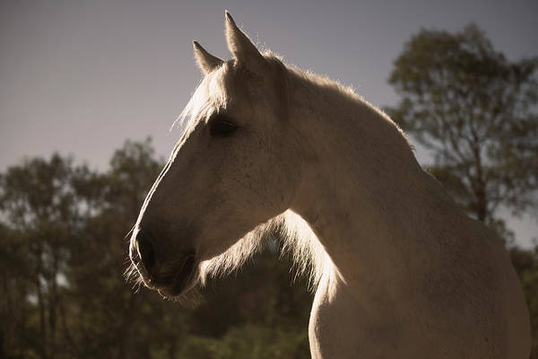 Photograph - Horse In A Countryside by Rob D Imagery