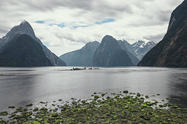Wall Art - Photograph - Milford Sound - New Zealand by Joana Kruse
