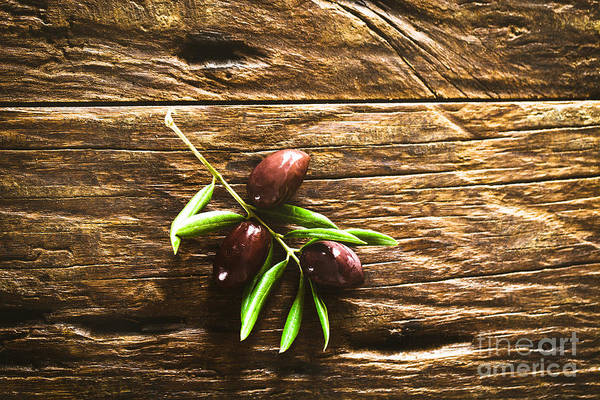 Wall Art - Photograph - Olives On Branch by Mythja Photography