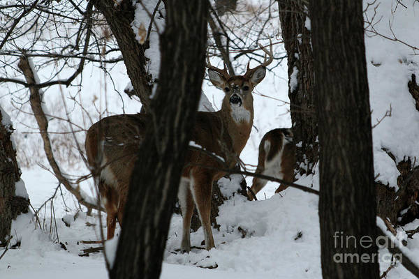 Wall Art - Photograph - Stag by Lori Tordsen