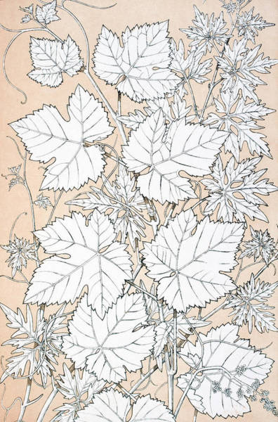 Wall Art - Drawing - The Grammar Of Ornament. Leaves And Flowers From Nature No 2  by Ken Welsh