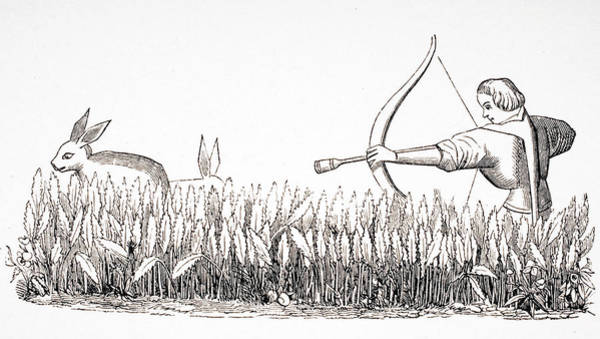 Wall Art - Drawing - How To Allure The Hare. by Ken Welsh