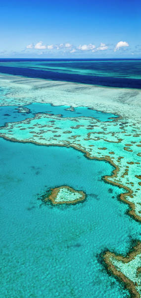 Coral Photograph - Great Barrier Reef by Andrew Watson