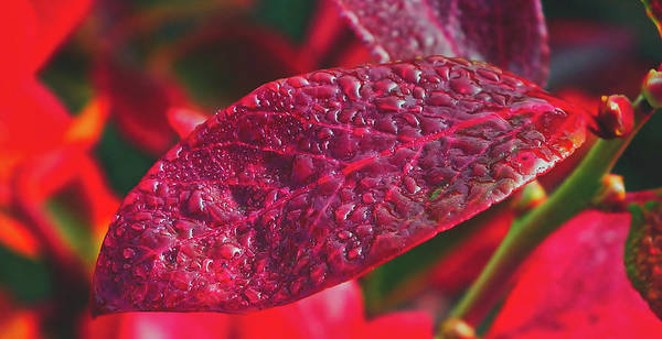 Bilberry Photograph - After The Rain by Pixabay