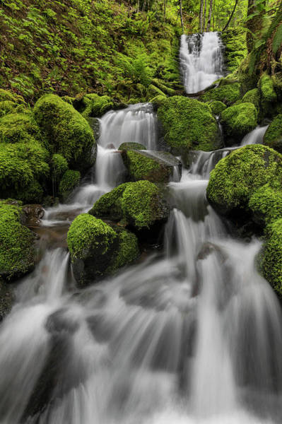Wall Art - Photograph - Usa, Washington State, Gifford Pinchot by Jaynes Gallery