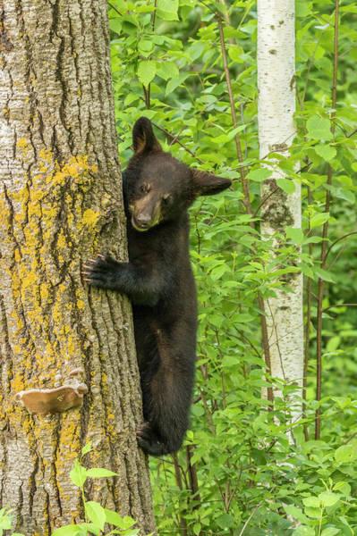 Wall Art - Photograph - Usa, Minnesota, Minnesota Wildlife by Jaynes Gallery