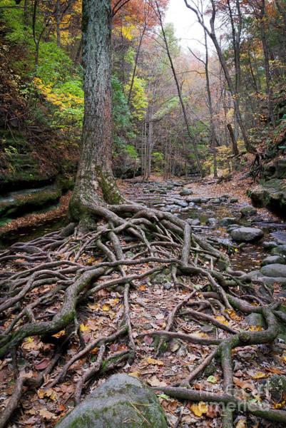 Photograph - 1508 Upper Dell Matthiessen State Park by Steve Sturgill