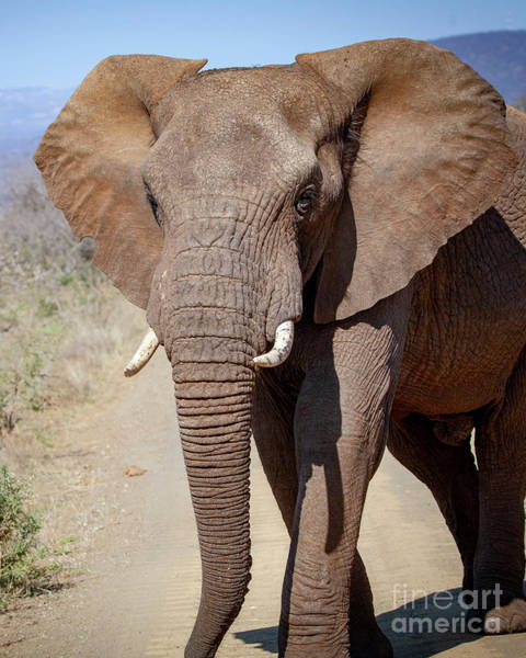 Photograph - 1549 African Elephant by Steve Sturgill