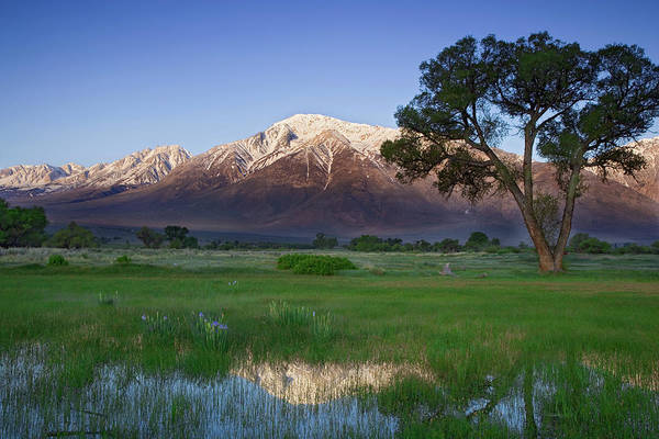 Wall Art - Photograph - Usa, California, Owens Valley by Jaynes Gallery