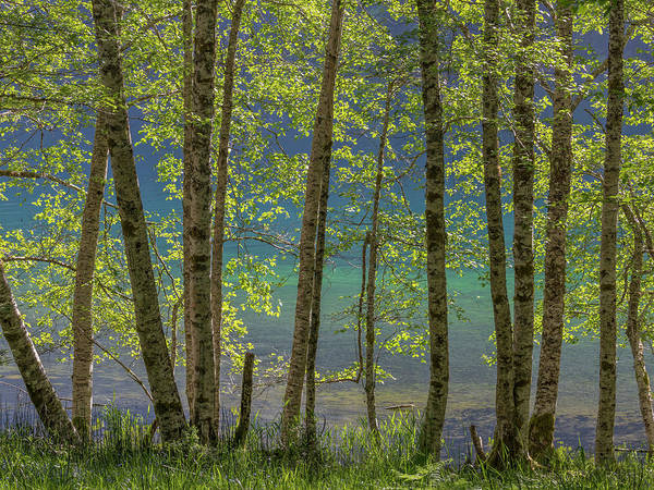 Alder Photograph - Usa, Washington State, Olympic National by Jaynes Gallery