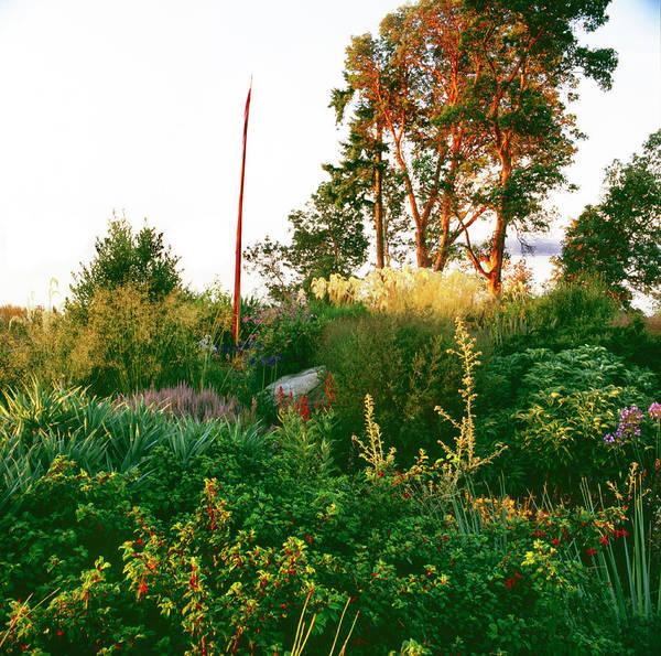 Whidbey Island Wall Art - Photograph - Dan Hinkley Garden by Richard Felber