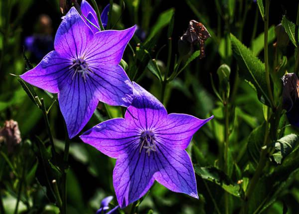 Photograph - Summer Flowers by Robert Ullmann