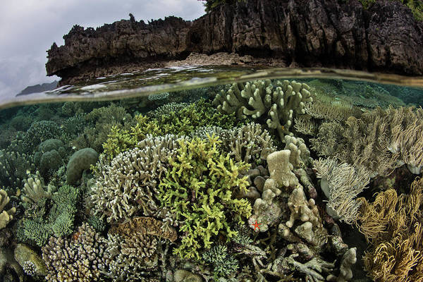 Wall Art - Photograph - A Beautiful Coral Reef Thrives Among by Ethan Daniels