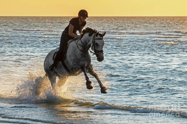 Photograph - Galloping In Sea by Arterra Picture Library