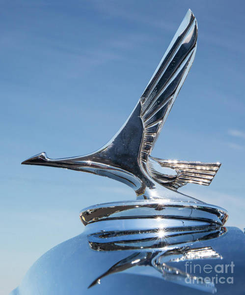 Photograph - 1931 Studebaker Automobile Hood Ornament by Kevin McCarthy