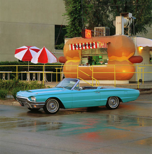 Dog Photograph - 1964 Ford Thunderbird Convertible by Car Culture
