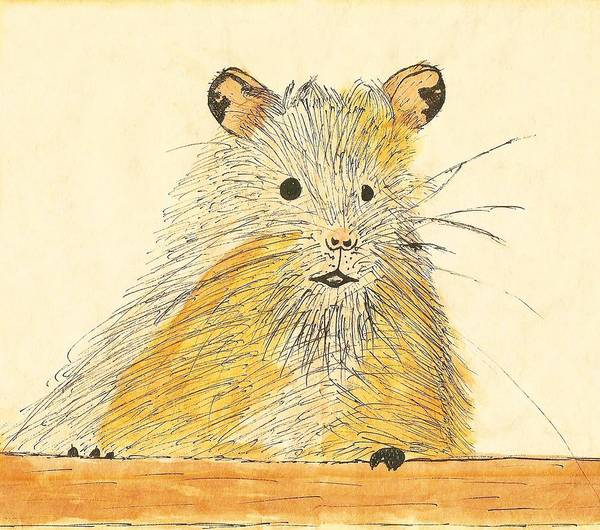Hamster Drawing - 1979 Hamster Sketch by Joylyn McChesnie