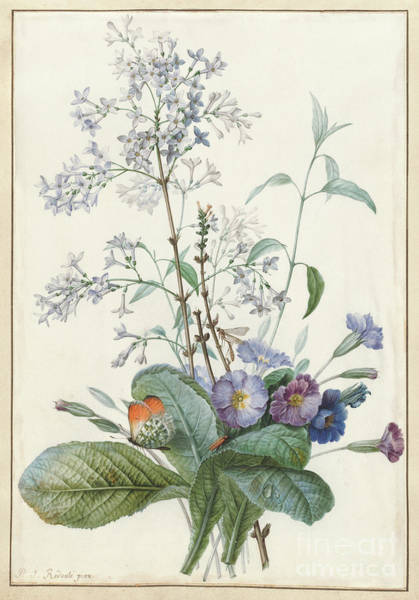 Wall Art - Painting - A Bouquet Of Flowers With Insects  by Pierre-Joseph Redoute