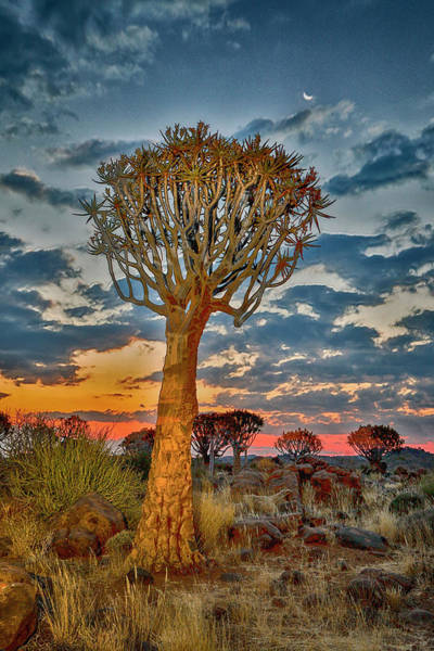 Wall Art - Photograph - Africa, Namibia, Keetmanshoop by Hollice Looney