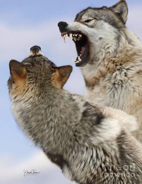 Wall Art - Photograph - Alpha Wolf  by Steve Gass