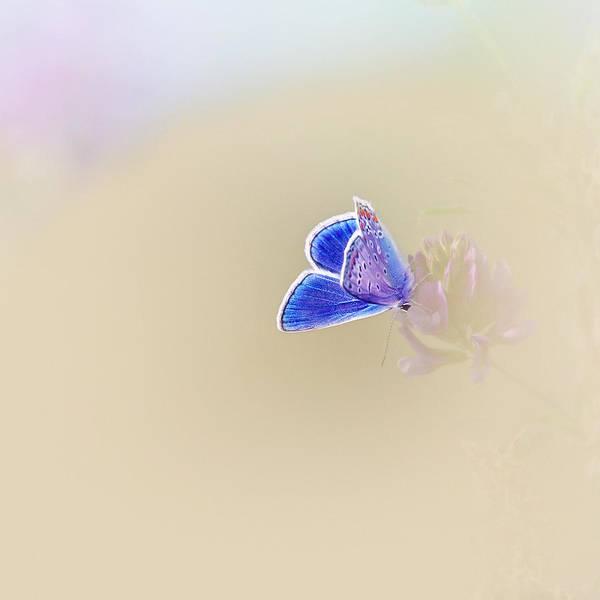 Photograph - Around The Meadow 2 by Jaroslav Buna