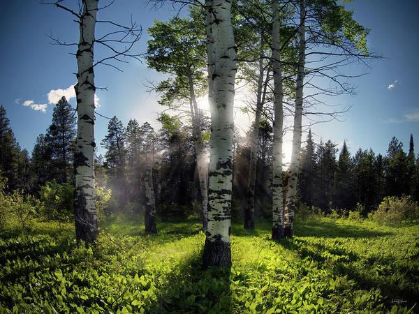 Photograph - Aspen Light by Leland D Howard