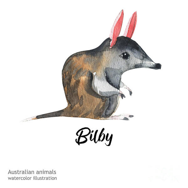Australian Wildlife Digital Art - Australian Animals Watercolor by Kat branches