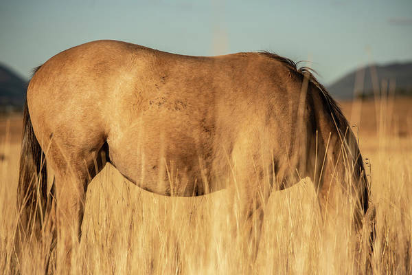 Photograph - Australian Horse In A Country Paddock. by Rob D Imagery