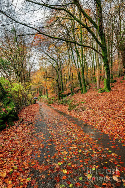 Wall Art - Photograph - Autumn Colours by Adrian Evans