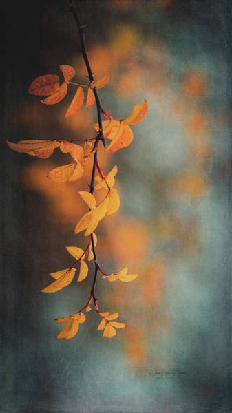 Wall Art - Photograph - Autumn Leaves by Maria Angelica Maira