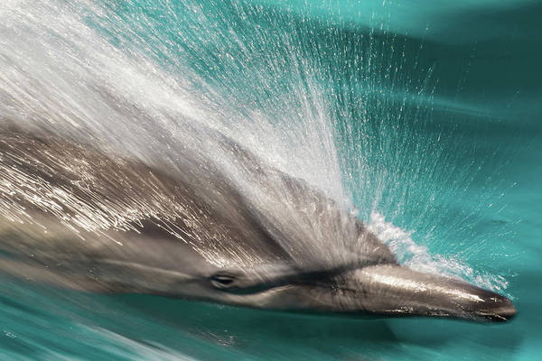 Wall Art - Photograph - Baja, Sea Of Cortez, Gulf by Janet Muir