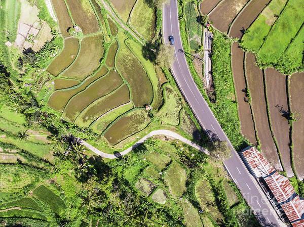 Photograph - Bali Rice Paddies by Didier Marti