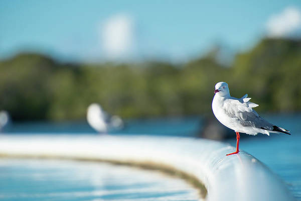 Photograph - Beautiful Seagull by Rob D Imagery
