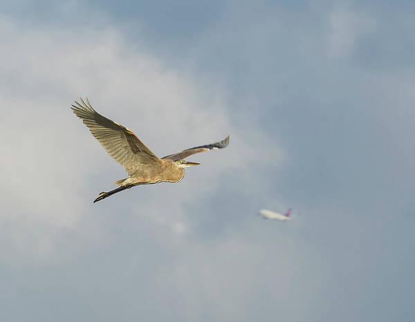 Photograph - 2 Birds But No Stones by Jonathan Hansen