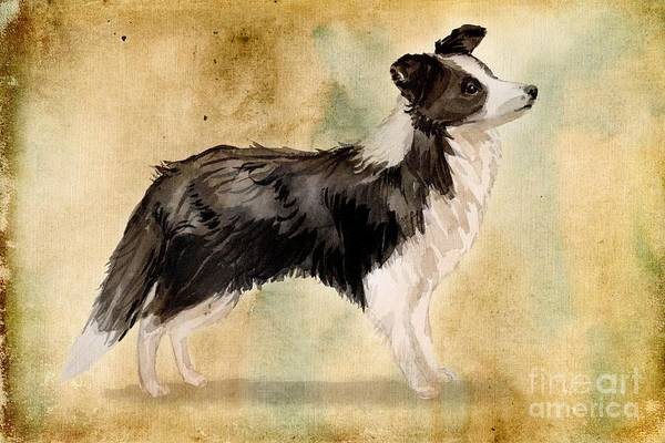 Pedigree Painting - Border Collie by John Edwards