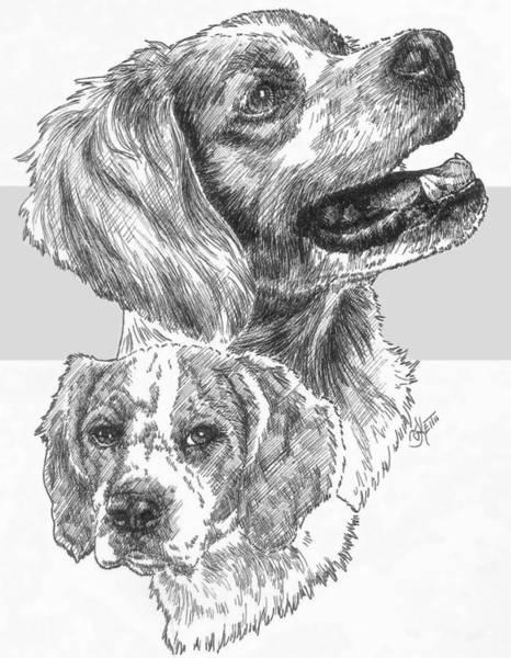 Drawing - Brittany Spaniel by Barbara Keith