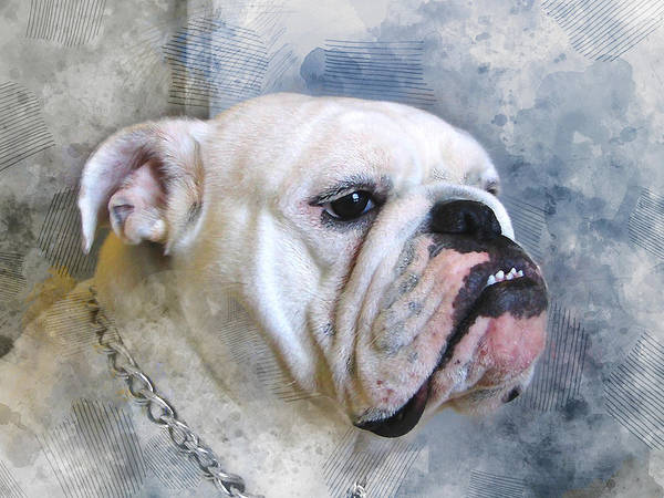 Wall Art - Mixed Media - Bulldog by Marvin Blaine