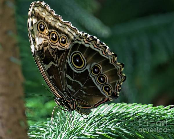 Butterfly Art Print by Elijah Knight