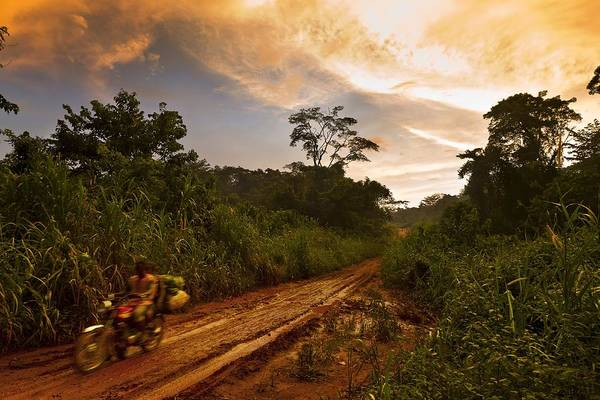 Photograph - Cameroon Logging by Brent Stirton